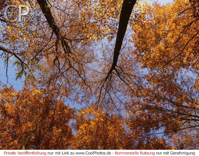 Herbstliches Blätterdach