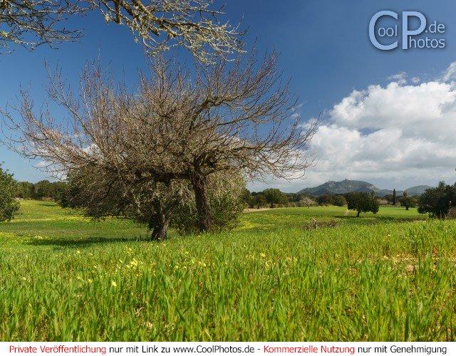 Dieses Motiv ist am 20.03.2017 neu in die Kategorie Frühlingsfotos von Mallorca aufgenommen worden.