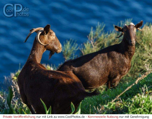 Dieses Motiv ist am 19.05.2017 neu in die Kategorie Tiere auf Mallorca aufgenommen worden.