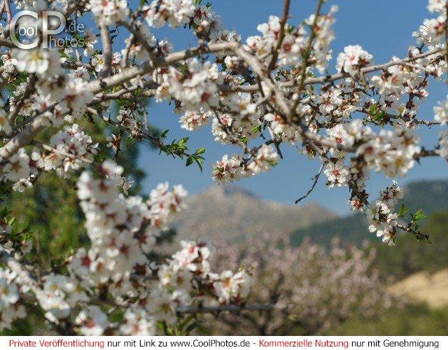 Dieses Motiv ist am 21.04.2017 neu in die Kategorie Frühlingsfotos von Mallorca aufgenommen worden.