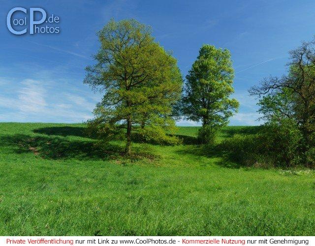 Bäume Mitte Mai  Dieses Motiv ist am 19.05.2017 neu in die Kategorie Frühlingslandschaften aufgenommen worden.