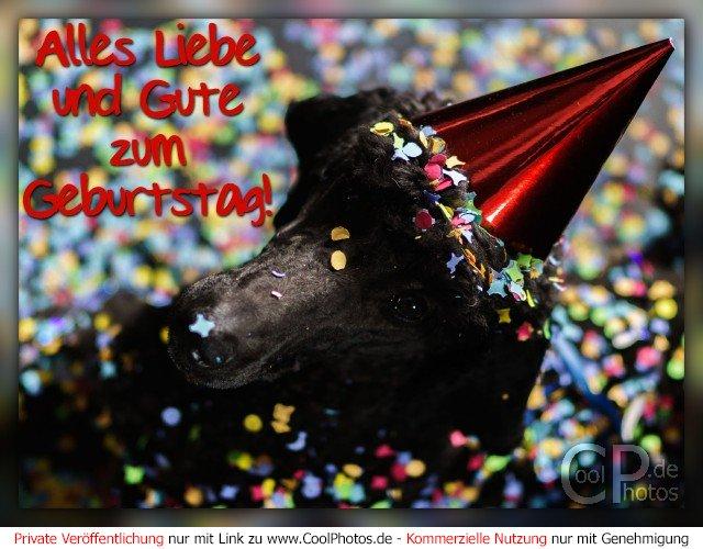 Alles Liebe und Gute zum Geburtstag!  Dieses Motiv ist am 09.01.2017 neu in die Kategorie Geburtstagskarten für Hundefans aufgenommen worden.