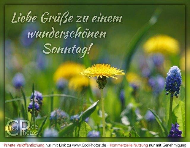 Coolphotosde Liebe Grüße Zu Einem Wunderschönen Sonntag