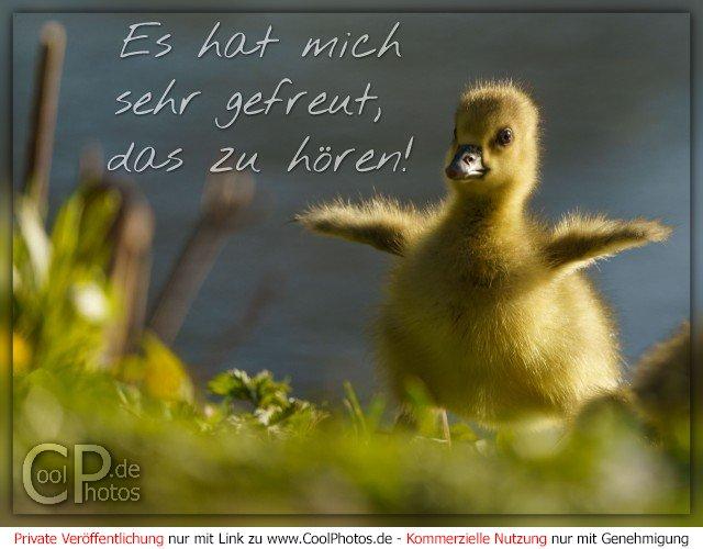 CoolPhotos.de - Es hat mich sehr gefreut, das zu hören!