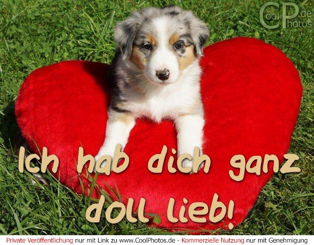 Die Ich Ganz Doll Lieb Daniel Stern