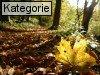 Herbstfotos