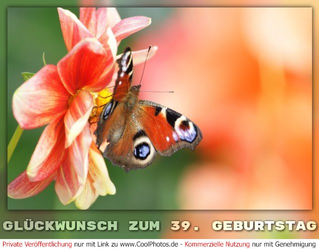 Coolphotosde Grußkarten Glückwunsch Zum 39 Geburtstag
