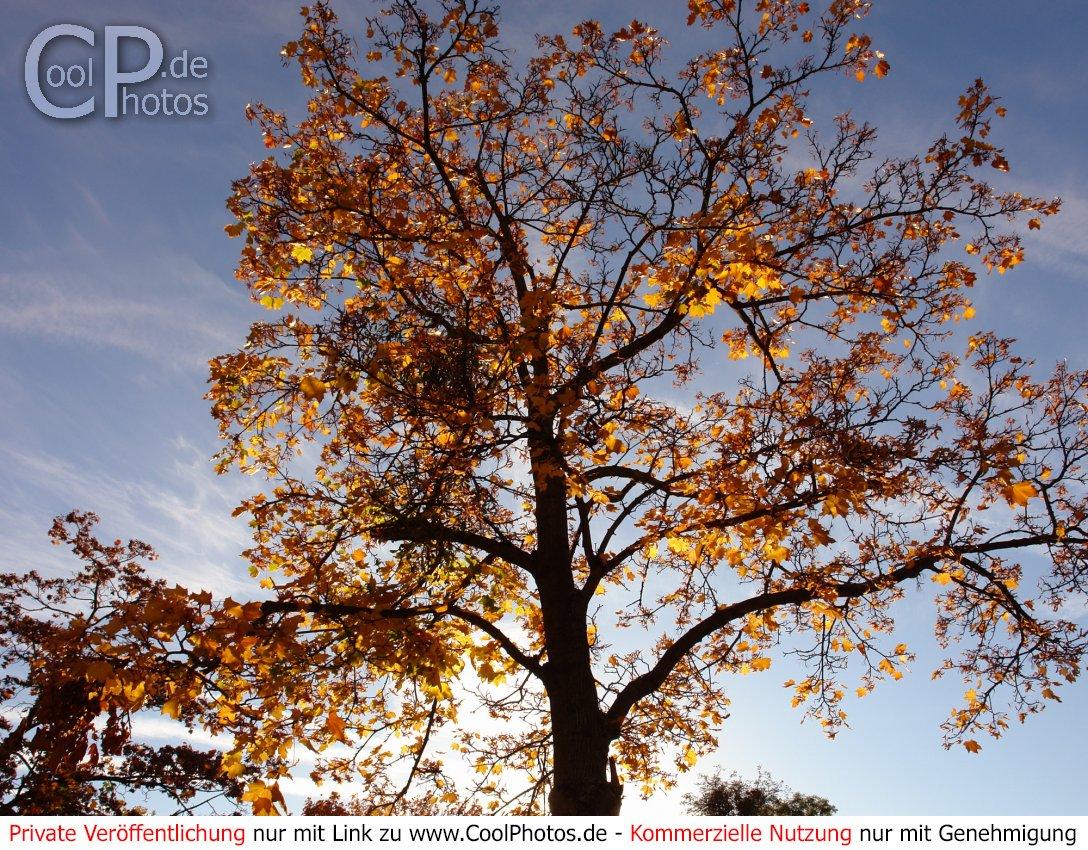 Bilder herbst kostenlos whatsapp Herbst Grüße