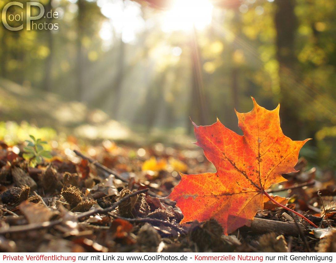 Herbst kostenlos bilder whatsapp Herbst Whatsapp