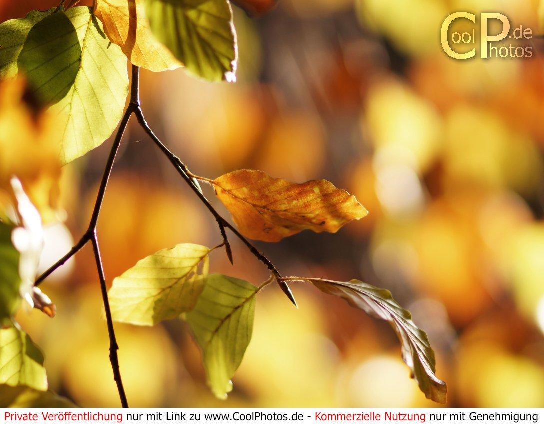 Herbst kostenlos bilder whatsapp Herbst Grüße