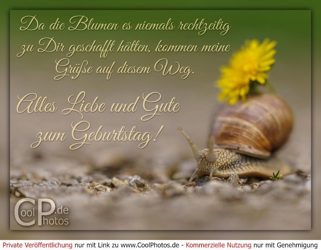 Natternkopf Blumen Samen Set Verruckt Lustig Witzige Geschenkidee