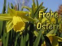 Frohe Ostern    Dieses Kartenmotiv wurde am 30. März 2003 neu in die Kategorie Osterkarten aufgenommen.