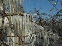Blick über einen eisbedeckten Ast auf weitere Obstbäume in einem Eismantel