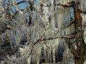 Steht einer der Bäume direkt an einem Wassersprüher, wie dieser hier, so werden seine Eiszapfen noch beeindruckender als bei den anderen Bäumen.