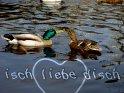 isch liebe disch    Dieses Motiv finden Sie seit dem 12. April 2003 in der Kategorie Liebe und Freundschaft: Ich liebe Dich.