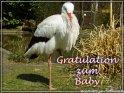 Gratulation zum Baby    Dieses Motiv finden Sie seit dem 15. April 2003 in der Kategorie Baby & Geburt.