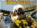 Frohe Ostern    Dieses Motiv befindet sich seit dem 17. April 2003 in der Kategorie Osterkarten.