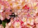 Psalm 27, 1    Dieses Motiv findet sich seit dem 18. Mai 2003 in der Kategorie Weitere Bibelsprüche.