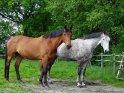 2 Pferde von der Seite