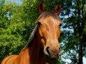 Pferdekopf    Dieses Motiv finden Sie seit dem 29. Mai 2003 in der Kategorie Pferde.