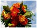 Blumenstrauss mit Gerbera und Rosen vor blauem Himmel