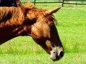 Pferdekopf    Dieses Kartenmotiv wurde am 15. Juli 2003 neu in die Kategorie Pferde aufgenommen.