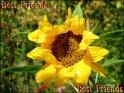 Best Friends    Dieses Motiv wurde am 21. August 2003 in die Kategorie Freundschaft eingefügt.