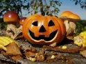 Herbstliche Szene mit geschnitztem Kürbis, Maiskolben und Pilzen