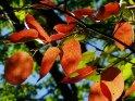 Dieses Motiv finden Sie seit dem 21. September 2003 in der Kategorie Herbstfotos.