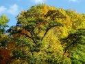 Dieses Kartenmotiv ist seit dem 12. Oktober 2003 in der Kategorie Herbstlandschaften.