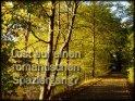 Lust auf einen romantischen Spaziergang?    Dieses Kartenmotiv wurde am 16. Oktober 2003 neu in die Kategorie Einladungskarten aufgenommen.