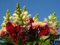 Blumenstrauß vor blauem Himmel