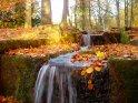 Ein farbenfroher Bachlauf im Herbstlicht