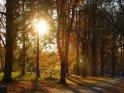 Die Herbstsonne scheint zwischen einer Reihe Bäume hindurch.