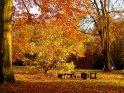 Herbst in den Schiller-Anlagen in Göttingen