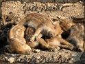 Gute Nacht - Erhole Dich Gut  Grußkarte mit einer Gruppe schlafender Frischlinge