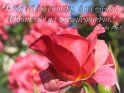 Liebe ist das einzige, das wächst, indem wir es verschwenden.  Ricarda Huch