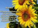 Silberhochzeit  Heil dem Paar, das heut aufs Neue Feiert seiner Liebe Band, Das wie einst, in inniger Treue  Heut noch wandelt Hand in Hand Blüten tragen ihm die Ehre, Bis aus Silber Gold noch werde.