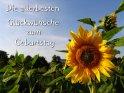 Die allerbesten Glückwünsche zum Geburtstag  Geburtstagskarte mit einer Sonnenblume vor blauem Himmel