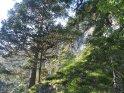 Bäume in den Alpen