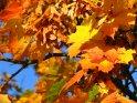 Herbstlich bunte Blätter vor blauem Himmel