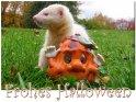 Frohes Halloween  Frettchen beim Spielen mit einer Halloween-Figur