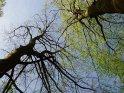 Bäume im Frühling gegen den Himmel fotografiert
