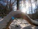 Winterszene im Wald mit einem seltsam gebogenen schneebedeckten Ast am Boden.