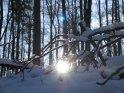 Mit Schnee bedeckte Zweige