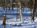 Zugefrorener Waldsee