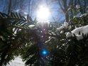 Dieses Motiv befindet sich seit dem 27. Februar 2005 in der Kategorie Schnee.