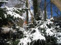 Schneebedeckte Tannen    Dieses Kartenmotiv ist seit dem 27. Februar 2005 in der Kategorie Schnee.