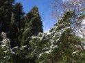 Dieses Motiv findet sich seit dem 27. Februar 2005 in der Kategorie Schnee.