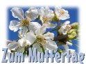 zum Muttertag    Dieses Kartenmotiv wurde am 29. April 2005 neu in die Kategorie Muttertag aufgenommen.